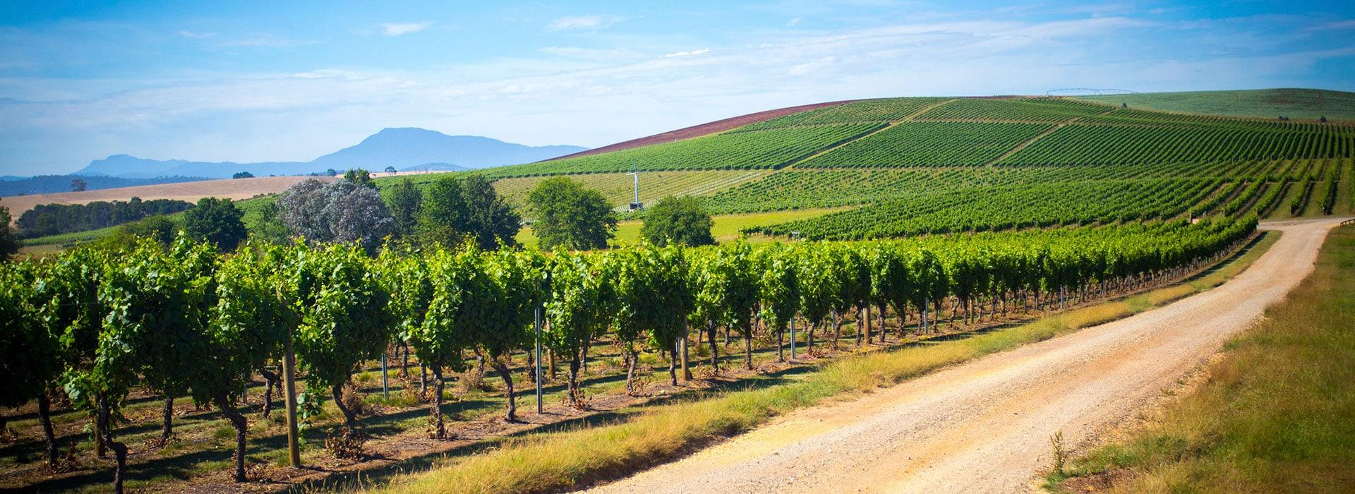 Tamar Valley Wine Tour